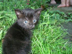 kittenoutside.JPG